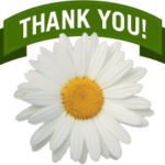 thank-you-daisy